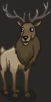 animal_elk