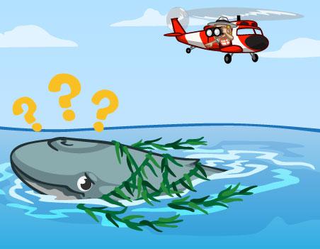 Materiais para as Baleias livre de algas no CityVille!